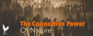 The Connective Power Of Nature | Francesco Galle | Artist In Toronto
